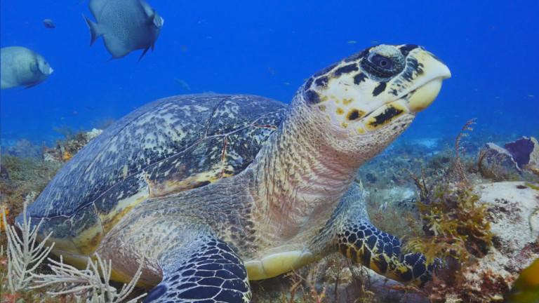 Cozumel, le récif mésoaméricain