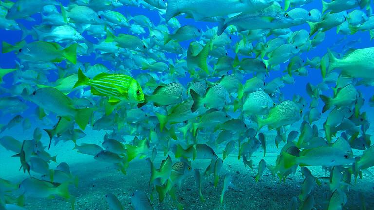 Mer de Cortez