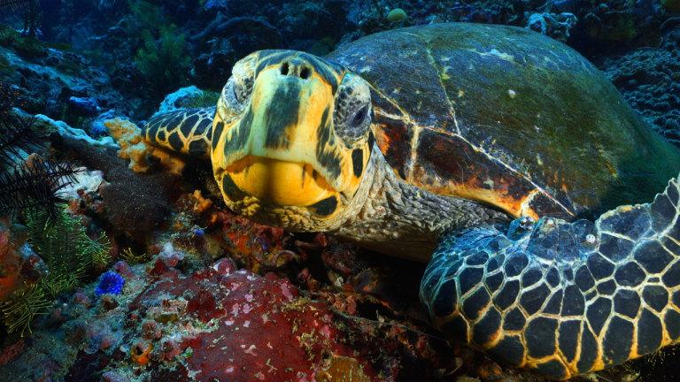 Indonésie, Amazonie marine