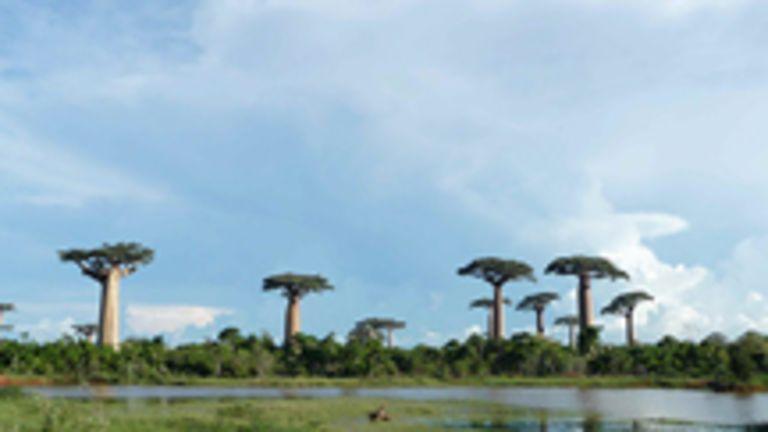 Madagascar : l'le rouge