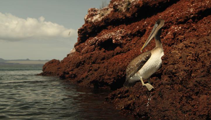 Tout inclus sur la route aux Galapagos