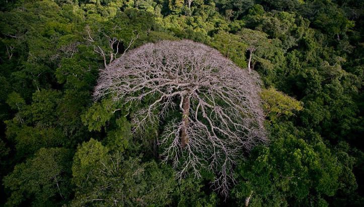 Vu du ciel au Gabon