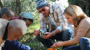 La récolte des olives