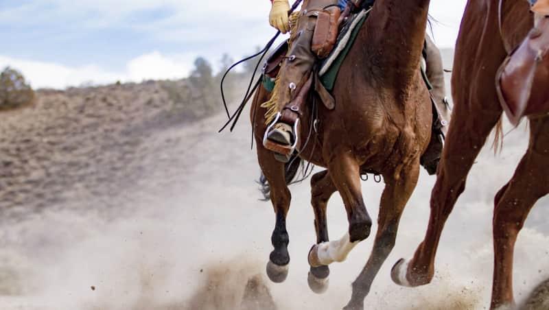 Cowboys et Stampede