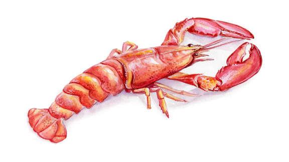 Le homard : à rougir de plaisir