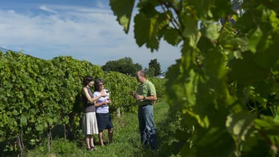Portes ouvertes Route des vins