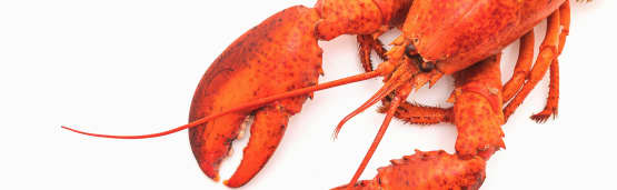 Comment cuire le homard?