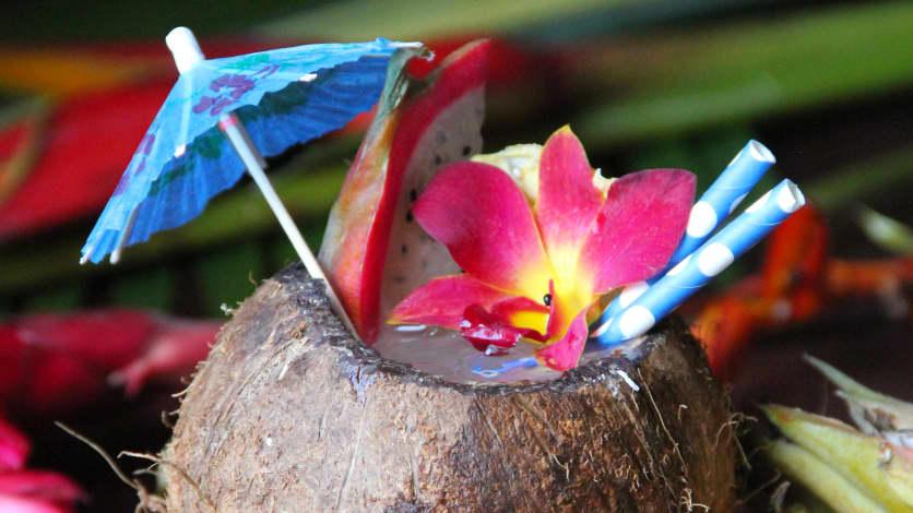 Coco Coriandre