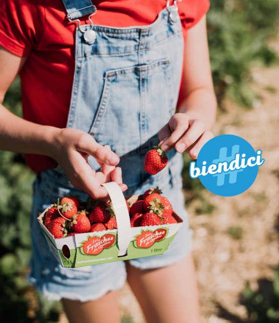 10 champs qui permettent l'autocueillette de fraises du Québec cet été!