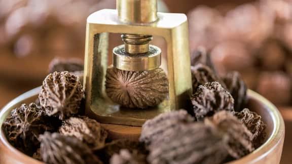 Les noix : l'agriculture en forêt