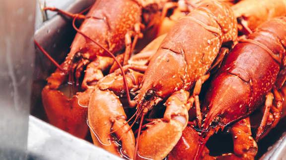Comment cuire le homard : trucs et astuces d'experts