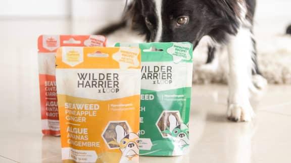 Wilder Harrier