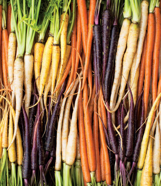 Carotte, la star des légumes racines