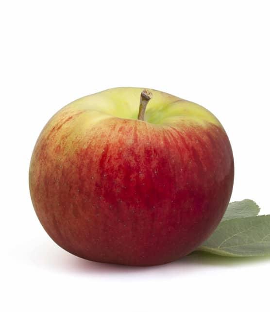 Calendrier de récolte des pommes