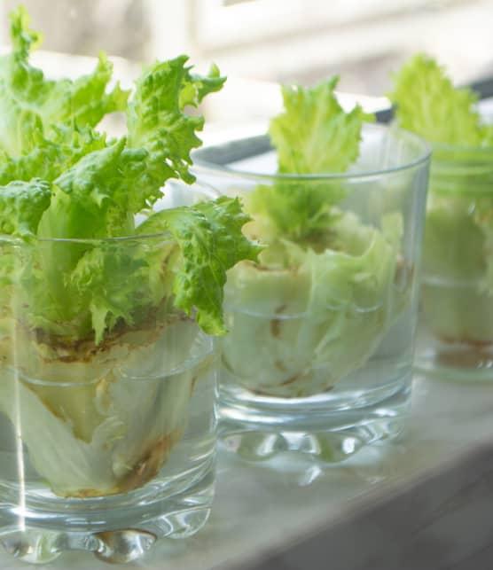 7 légumes qui repoussent facilement à partir des restes