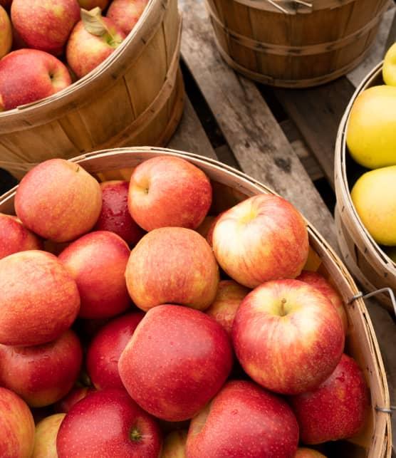 10 pommes à découvrir et cueillir en automne au Québec