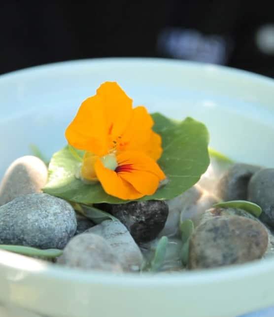 huîtres avec feuilles et fleurs de capucine