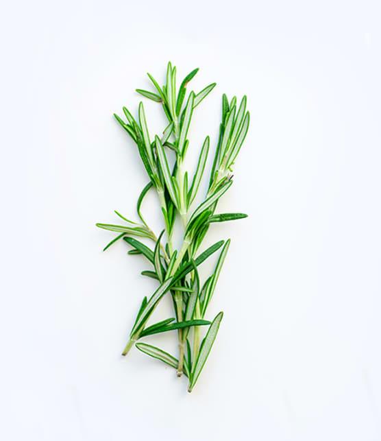 Testé pour vous : Comment faire sécher des fines herbes