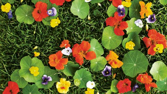 Les fleurs dans votre assiette!