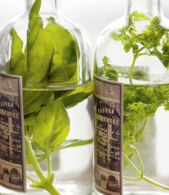 7 fines herbes méconnues à cultiver dans votre potager