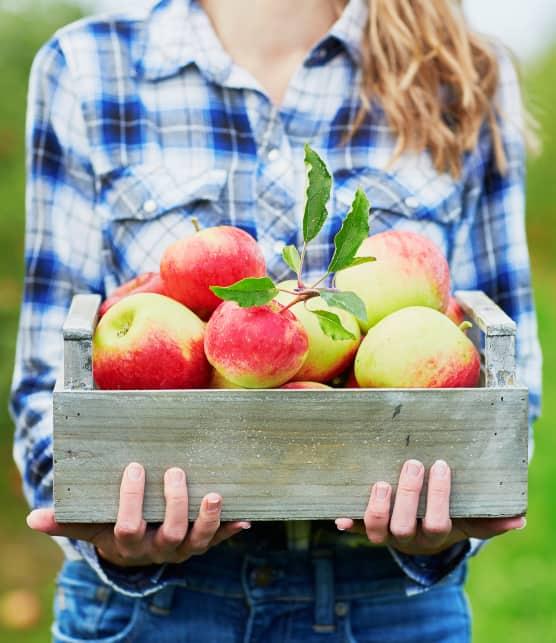La cueillette de pommes