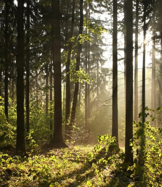 La forêt des affranchis