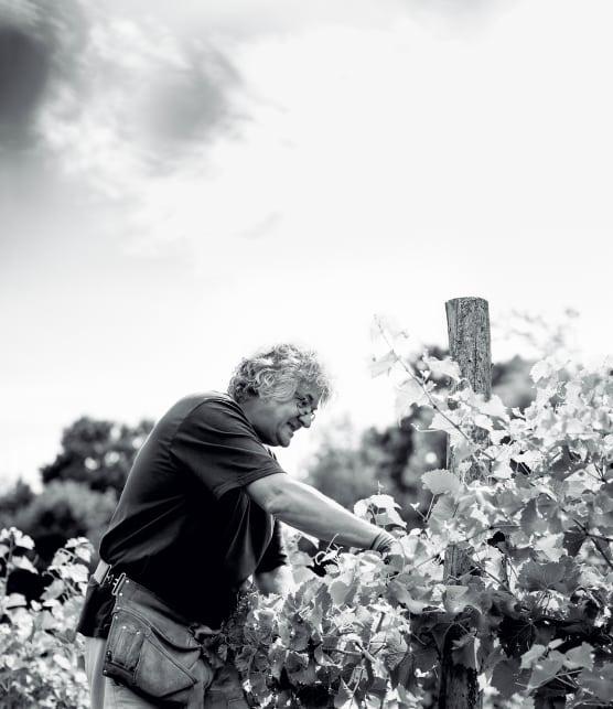 Négondos : d'exceptionnels vins bio et nature