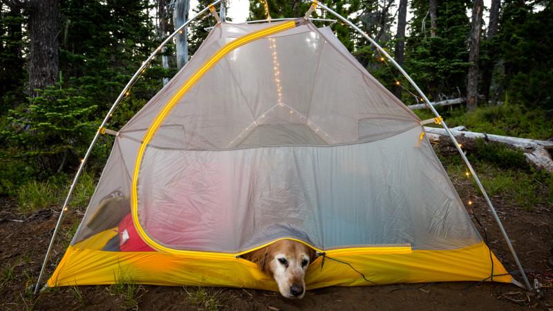 Québec Acceptent Espaces 5 Les Camping Qui Chiens Au Terrains qwgxpHA5