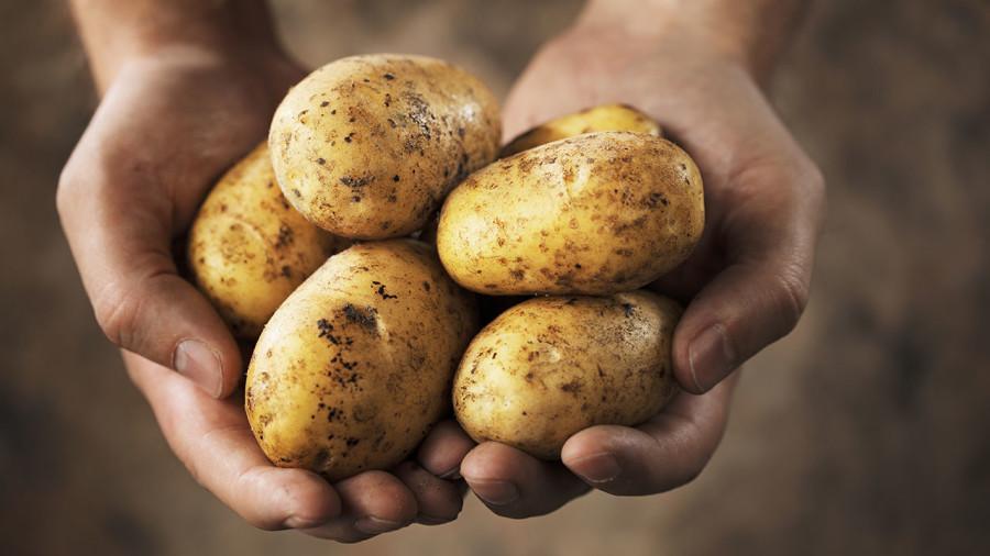 Les patates seraient-elles aussi efficaces que les barres énergétiques?