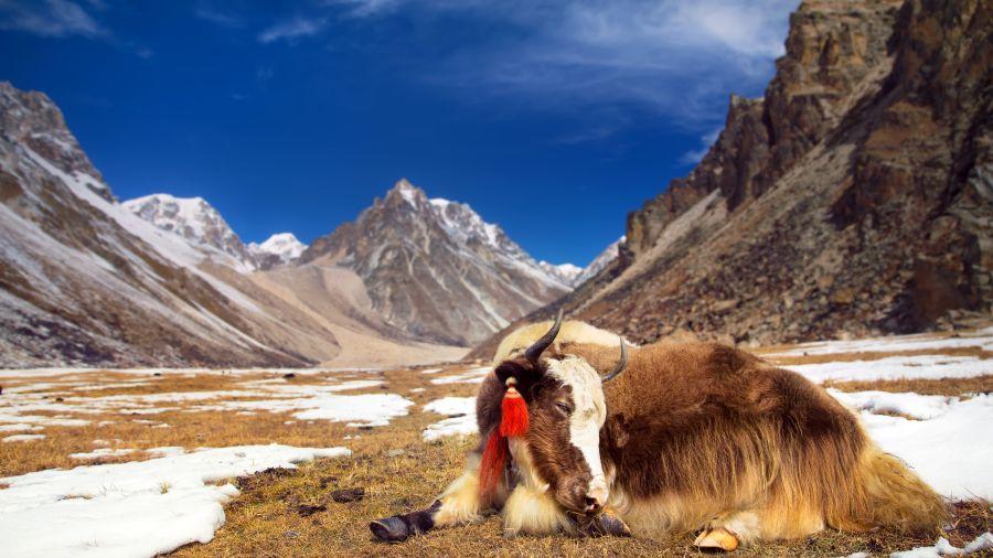 Trek pour découvrir l'Himalaya : La vallée de Katmandou