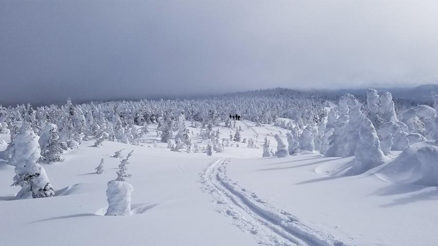 Agences et voyagistes du Québec : quels voyages cet hiver face à la COVID ?
