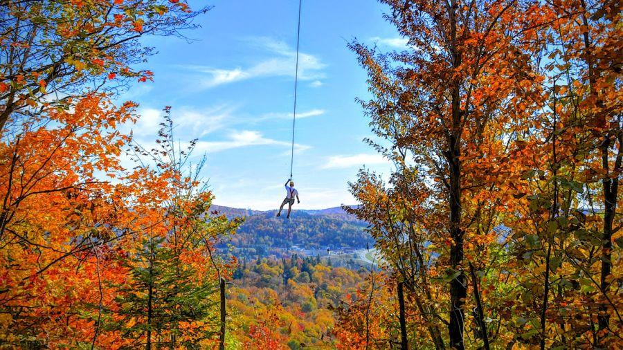 L'automne du haut des arbres