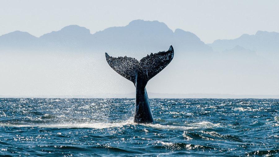 Meilleures randonnées pour observer les baleines
