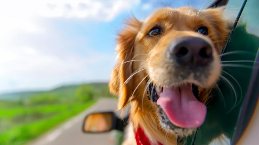 10 choses à savoir pour un road trip réussi avec son chien