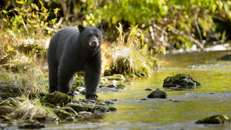 Observer la grande ourse (de très, très près)