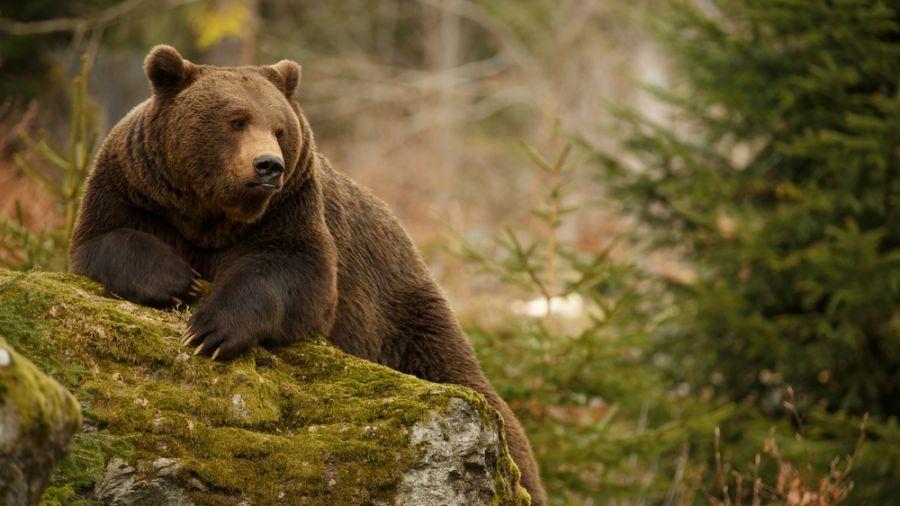 Camps sportifs ou nature : Zoo de Saint-Félicien