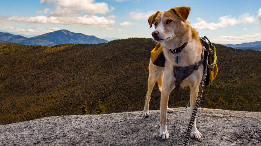 Dix conseils pour bien randonner avec son chien