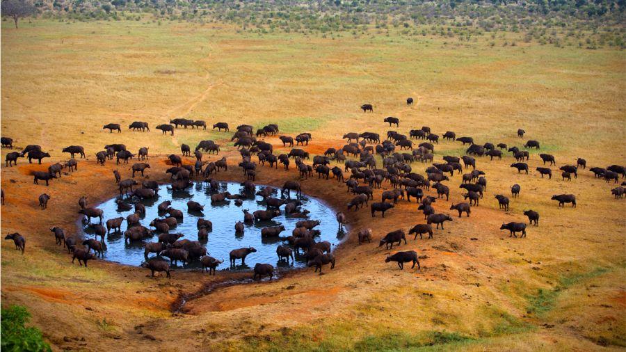 Le Kenya entre ciel et terre
