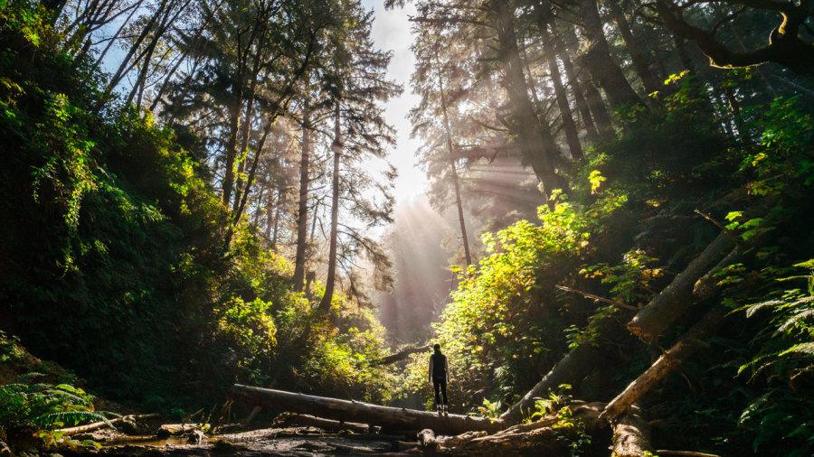 Perdu en forêt : Comment retrouver son chemin ?