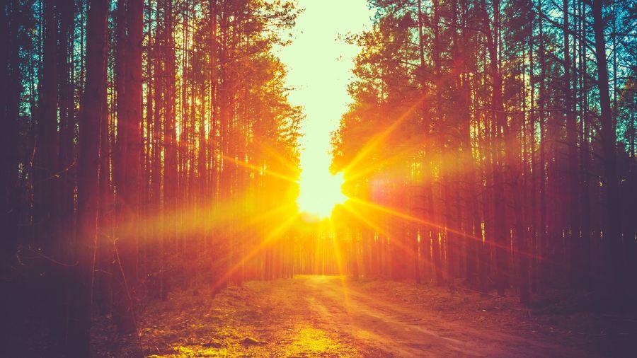 Randonnées de moins de 72 heures: Parc régional de la forêt Ouareau