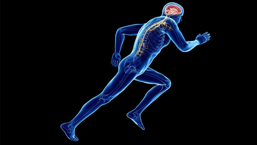 L'exercice physique et le sport sont bons pour le cerveau