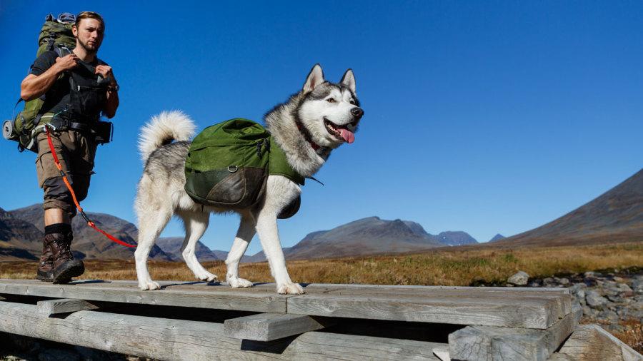 Conseils pour partir en trek avec son chien