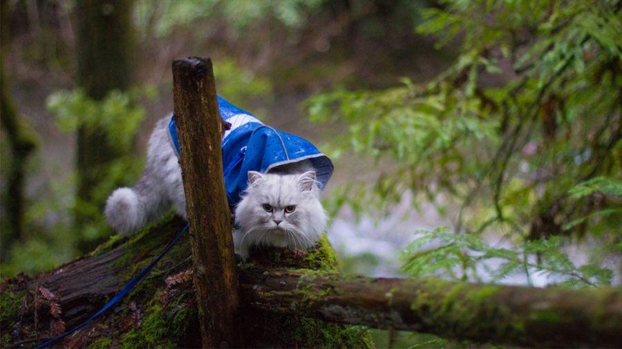 Gandalf, le chat randonneur