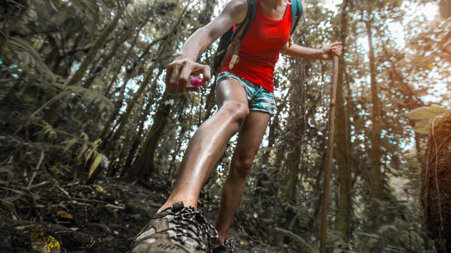 Maladie de Lyme : prévenir les piqûres de tique en randonnée