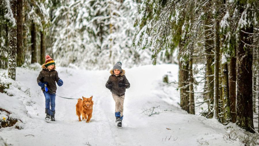 8 sentiers pour randonner avec son chien cet hiver