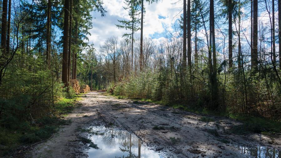 Sauvetage sur le sentier international des Appalaches : le labyrinthe