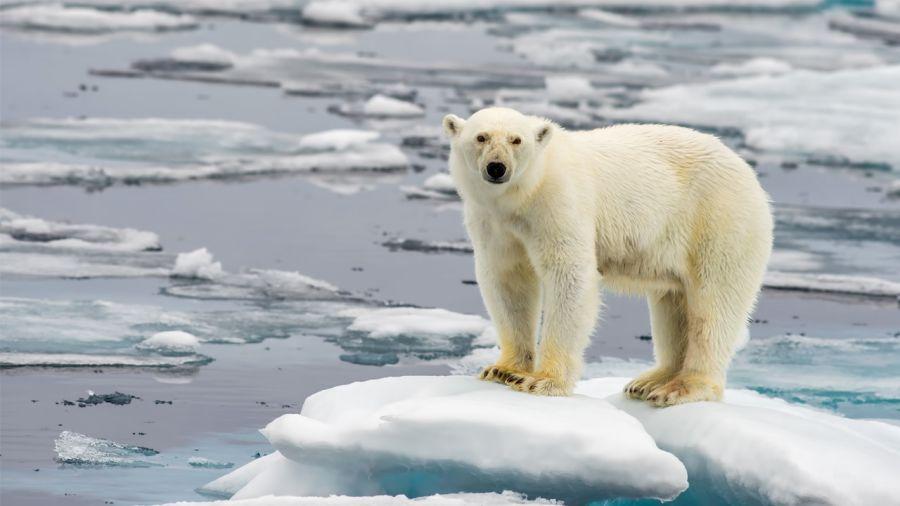 Dormir au pays de l'ours polaire