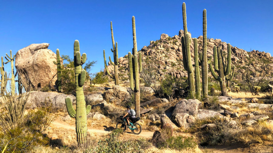 Arizona : Bikepacking au pays des cactus géants