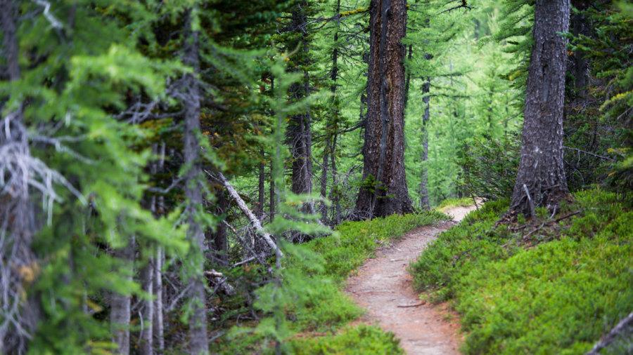 Sentiers : Designer de nature
