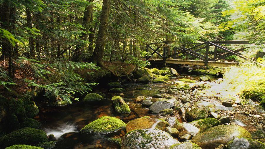 Sentier méconnu: Tronçon d'accès au mont Victoria